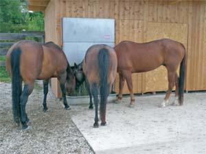 Horseking - Portionsraufe - pro 2 - 3 koně